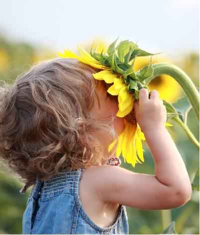 Kind riecht an einer Sonnenblume